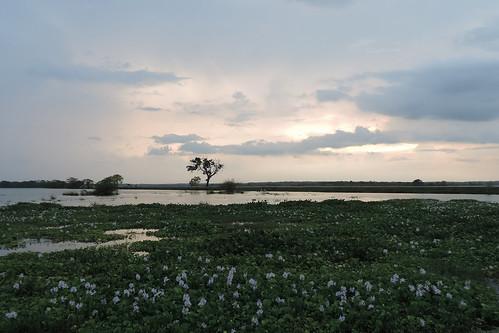 travel sunset sky lake water landscape asia outdoor wetlands srilanka ceylon uva grasslands hyacinth southasia uvaprovince weerawilalake