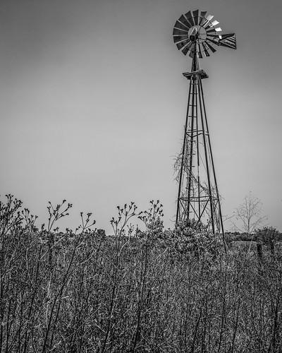 ranch old columbus blackandwhite bw windmill monochrome us blackwhite weeds texas unitedstates farm vanes aermotor
