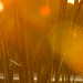 Sunset through the Fronds by Mike Seigafuse