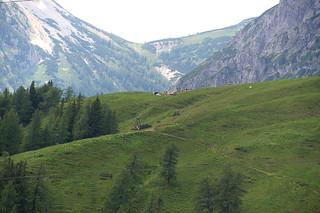106 uizicht op Alpenweide met koeien