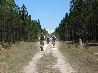 Forest Management Road