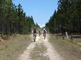Forest Management Road