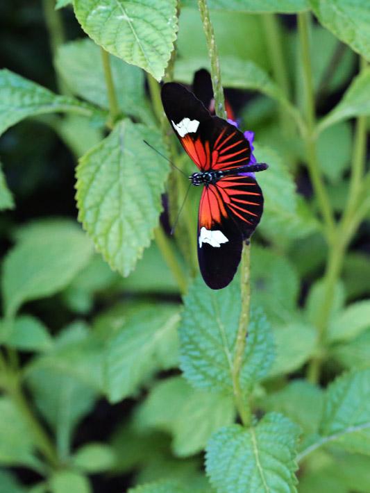 091014_01_butterfly05
