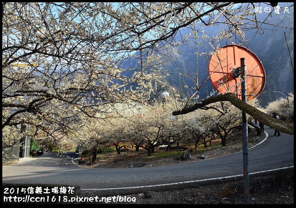 2015信義土場梅花DSC_9347