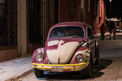 Lonely Beetle ...