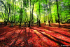 forest with sunlight and vivid colors