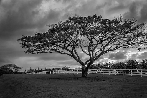 sky white tree fence landscape hawaii blackwhite unitedstates sony kauai kilauea a65