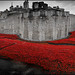 UK - London - Tower of London - Blood Swept Lands And Seas Of Red 11 - iphone panorama by Darrell Godliman