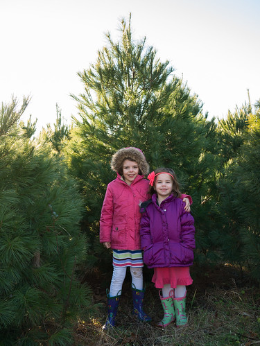 Christmas tree picking
