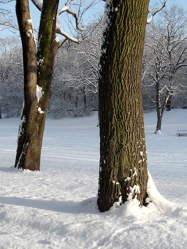 Baumstämme im Schnee
