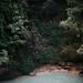 el chiflón by tuli nishimura