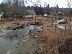 The Thornton Creek Confluence & Meadowbrook Pond Project