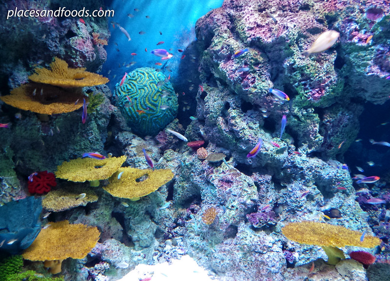 sea aquarium colourful corals