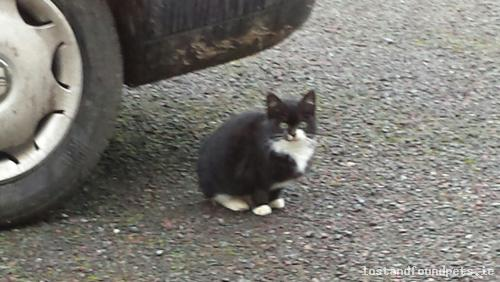 Sun, Jan 4th, 2015 Found Male Cat - Delvin, Killadoran, Westmeath