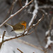 Robin a small bird picture from my garden Happy New Year to you my friends on Flickr. by TimerTom