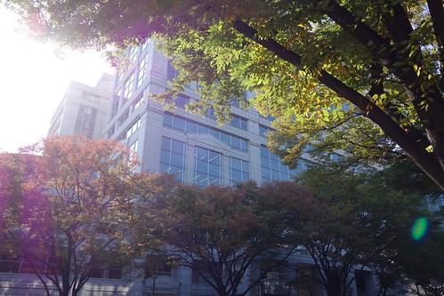 "Shibuya_19 渋谷の表参道で撮影した写真。 ""青山パラシオタワー""。 大きな街路樹と道路の向かい側のビルディングが写っている。"
