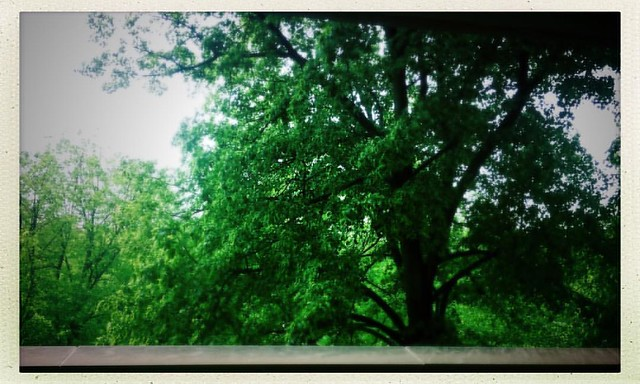 Spring #trees #leaves #spring #bloomingtonindiana #hermanbwellslibrary #wellslibrary #iubloomington