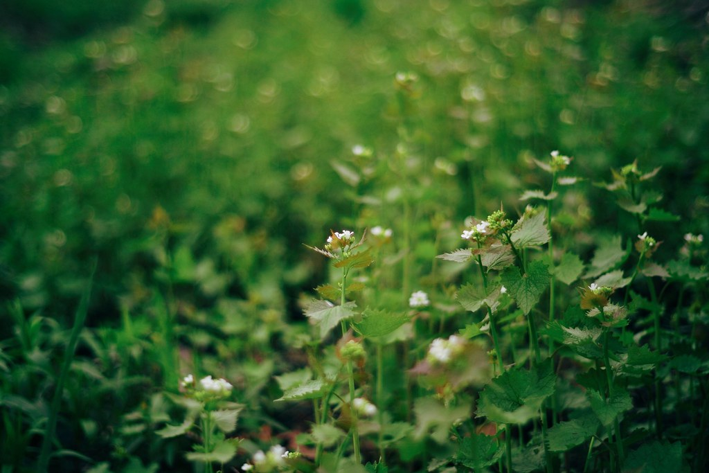 Flowers twinkle amongst the greenery