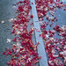 Foglie rosse su marciapiede