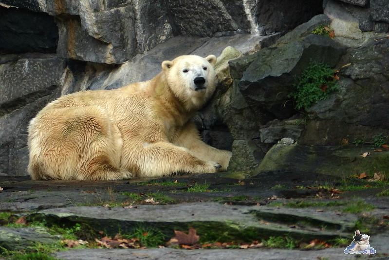 Tierpark Berlin 06.12.2014 194