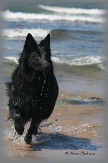 Kizzy Enjoying Running in and Out of The Water