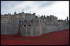 The Tower of London Poppys 3 by MTB1975