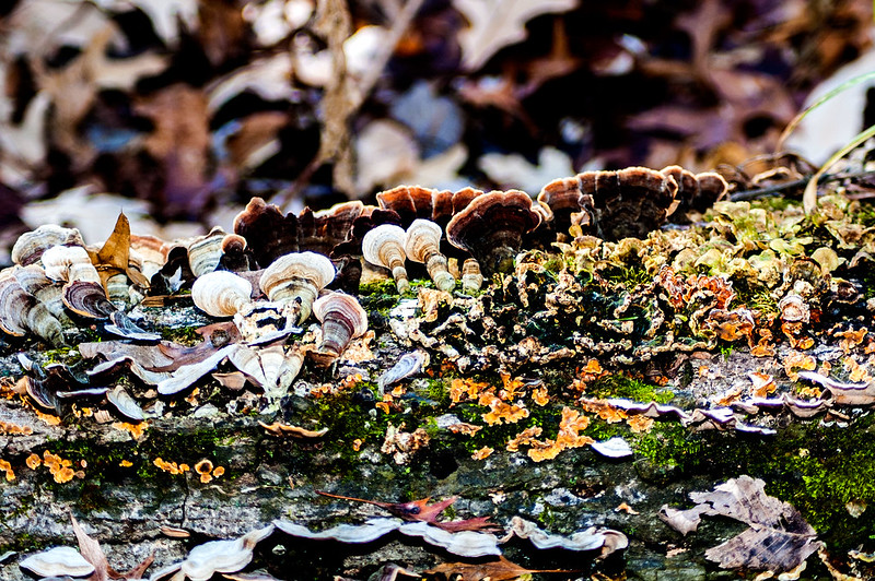 Thousand Acre Woods Nature Preserve - November 25, 2014