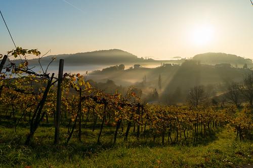 autumn sunrise landscape österreich sony herbst vineyards 1018 landschaft sonnenaufgang steiermark oss 2014 weinberge südsteiermark ratsch weingärten southstyria ratschanderweinstrase sonynex nex6