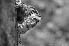 Fungus-0487