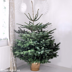 Creekside Christmas tree