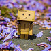 Danbo amongst the jacaranda