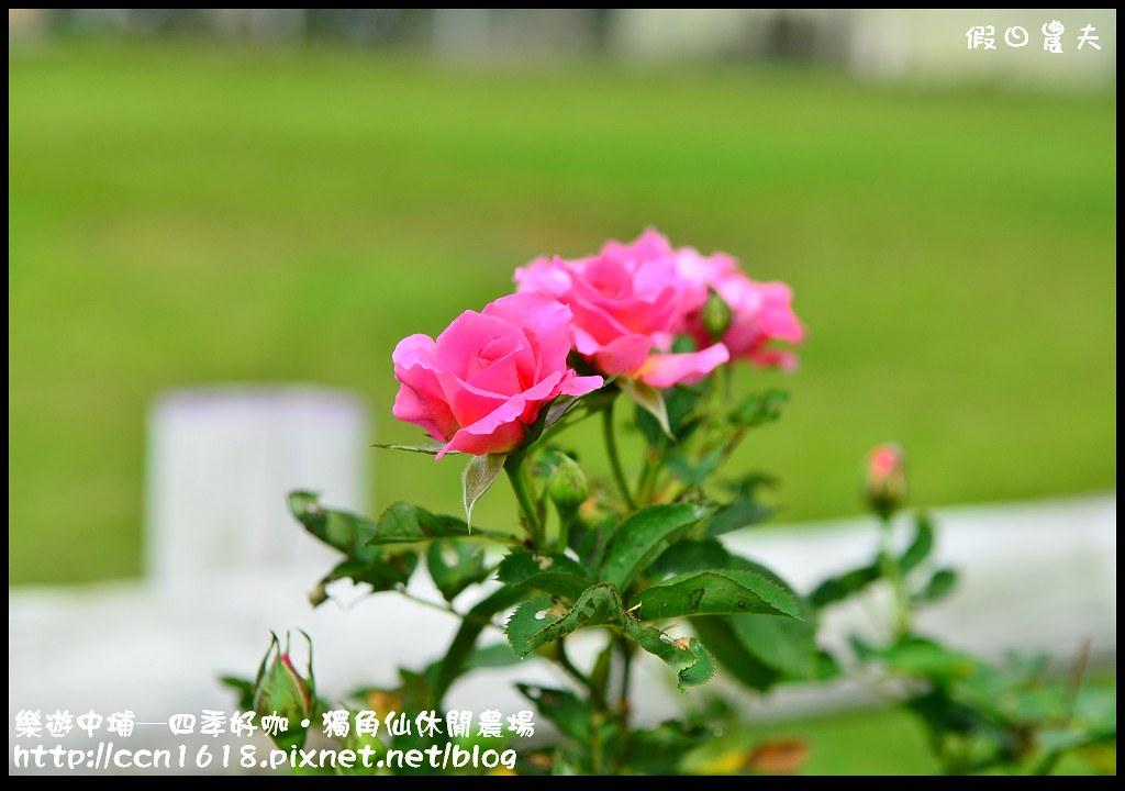 樂遊中埔─四季好咖‧獨角仙休閒農場DSC_3894