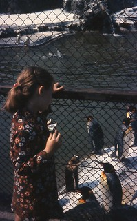 Penguins at Edinburgh Zoo, July 1972