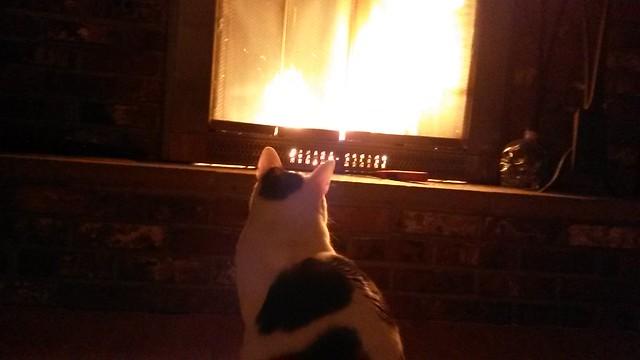 Pyromania kitteh