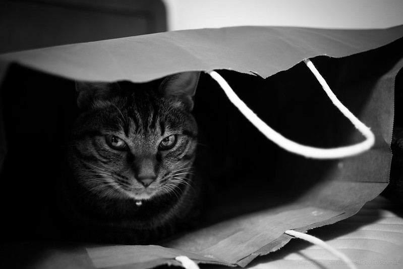 Cat in a paper bag