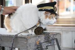 NITAMA CAT MASTER