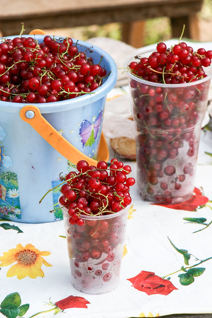 Berries selling shop in outdoor market, Suzdal, Russia スズダリ、青空市場のベリー屋さん
