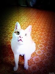 【My iphone photo】 ~喵~