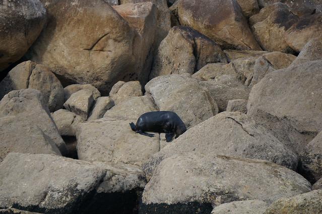 A seal in Abel Tasman Natl Park