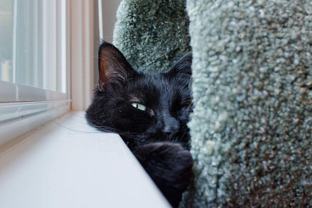 Our cat Emma resting in the cat tree