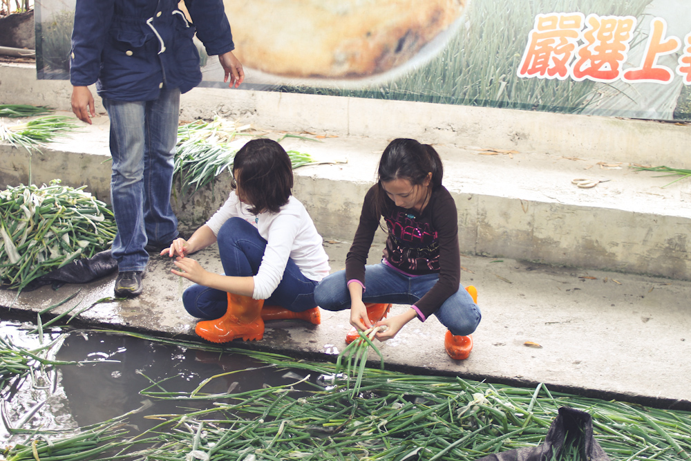 Yilan Spring Onion Country-8