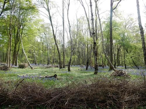 Butchers Wood