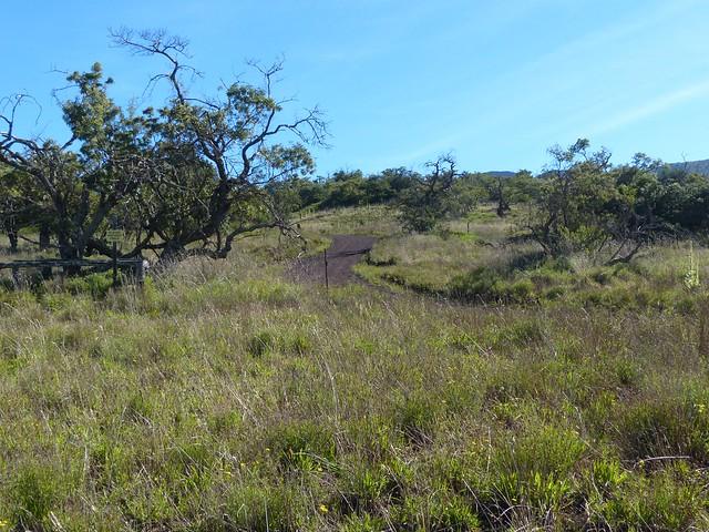 Mauna Kea slope Forest Home to the Palila