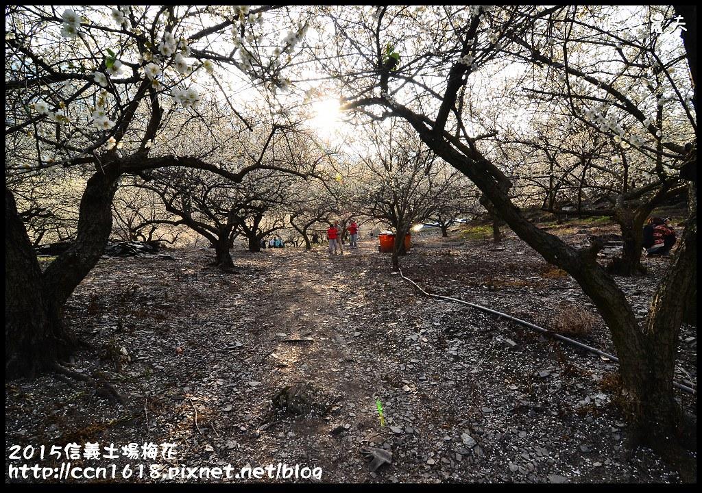 2015信義土場梅花DSC_9303