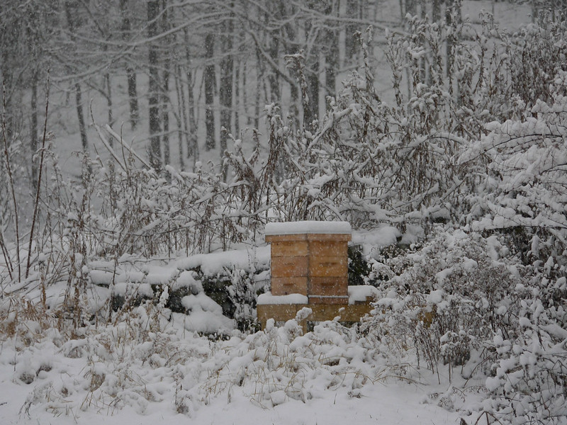 Bees' first winter