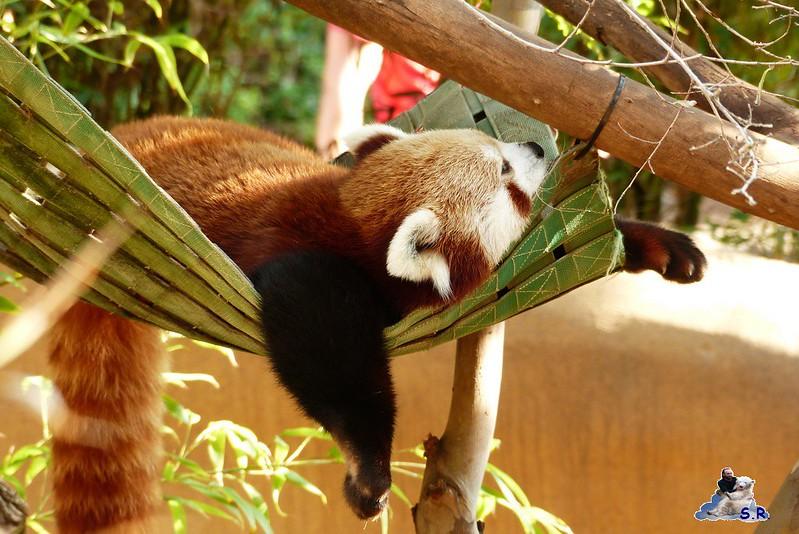San Diego Zoo 10.11.2014 189
