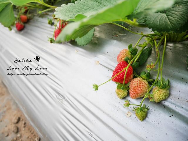 內湖採草莓圃咖啡下午茶 (21)