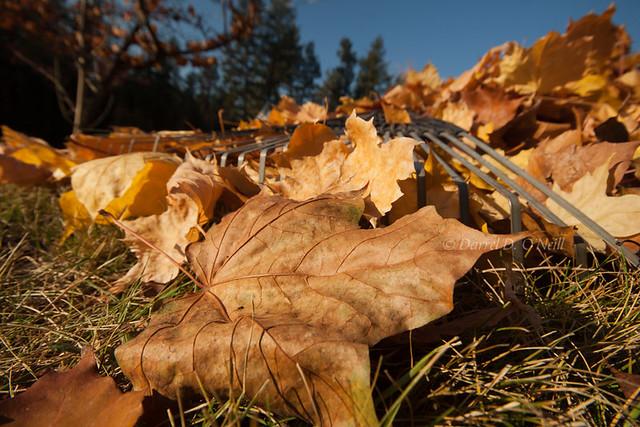 Autumn in the Garden 8