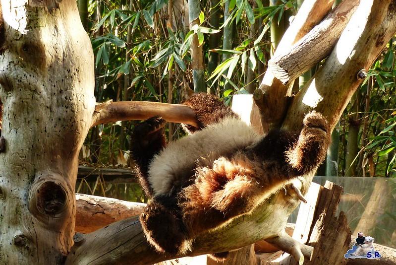 San Diego Zoo 10.11.2014 234