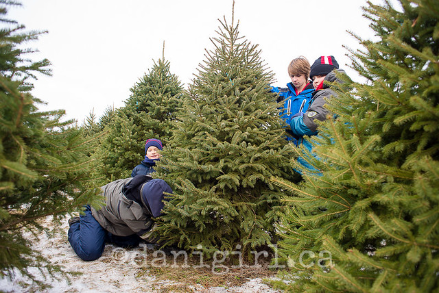 Christmas tree quest 2014